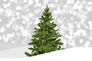 Weihnachtsbaum-mieten-worum-geht-es-und-wozu-ist-es-gut
