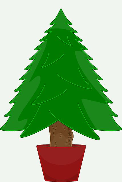 Weihnachtsbaum-im-Topf-mieten-oder-kaufen