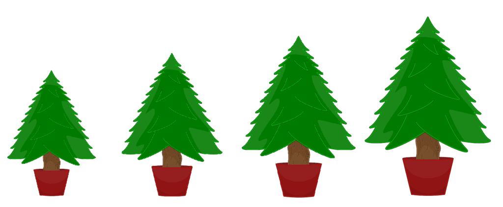 Startseite - Weihnachtsbaum mieten - Baumeria 3